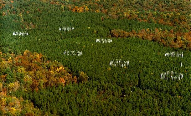 O projeto de enriquecimento de CO2 para árvores na Carolina do Norte (EUA) (Foto: Universidade Duke)